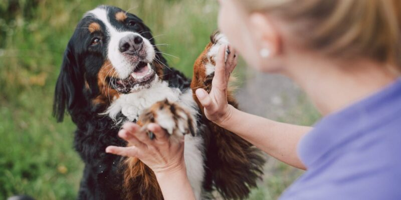 10 benefits of having a dog for your mental and physical health