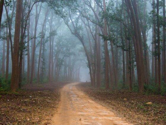 The most haunted roads in the US and the chilling stories behind them