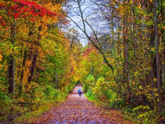 Photos of what fall looks like in every state