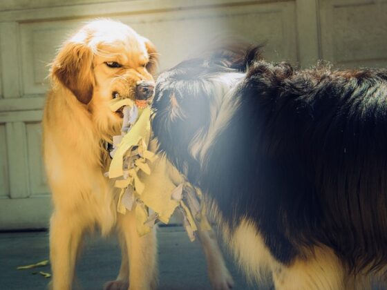 How to Treat Aggression in Dogs: A Complete Guide 10