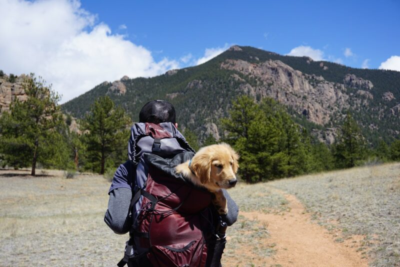 Three Travel Tips for a Dog-Friendly Vacation 1