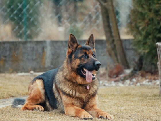 Trazodone: An Anti-Anxiety Drug For Dogs 1